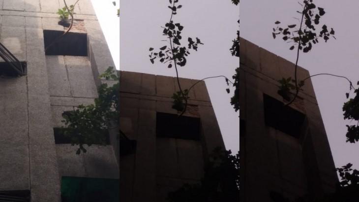 peepal tree on flat